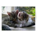 Gatitos soñolientos tarjetas
