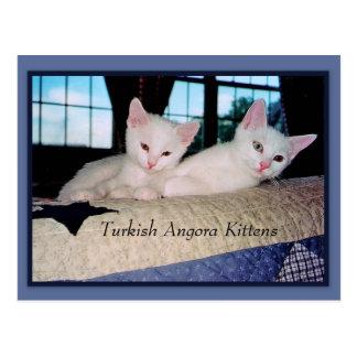 Gatitos turcos del angora postales