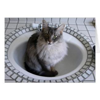 Gato 10806 en fregadero del cuarto de baño tarjeton