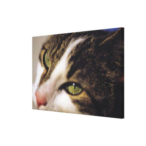 gato 2 lienzo envuelto para galerías