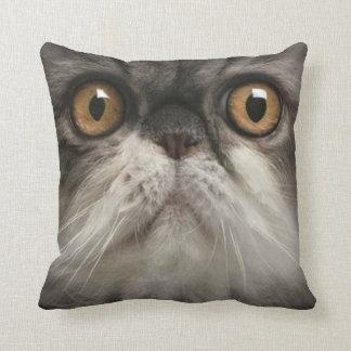 gato 4 del mascota de la almohada