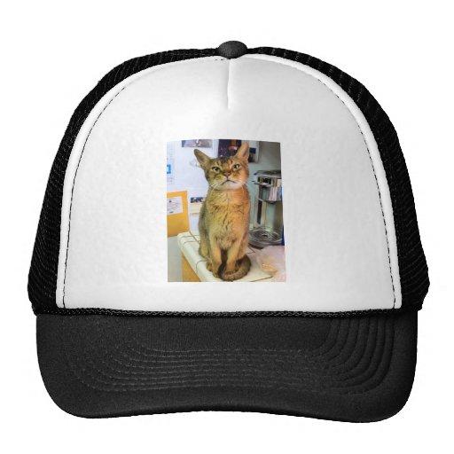 Gato abisinio (Abby) Gorros