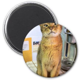 Gato abisinio (Abby) Imán Redondo 5 Cm