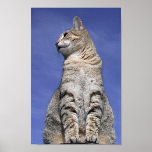 Gato abisinio póster