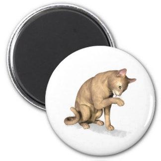 Gato abisinio que se lame la pata imán redondo 5 cm