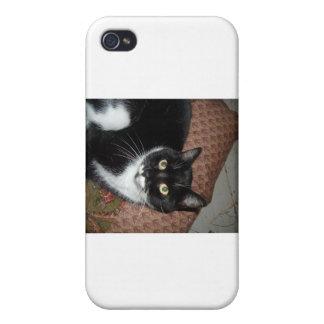 Gato adoptado feliz iPhone 4/4S fundas