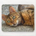 Gato adorable de Bengala Tapetes De Ratón