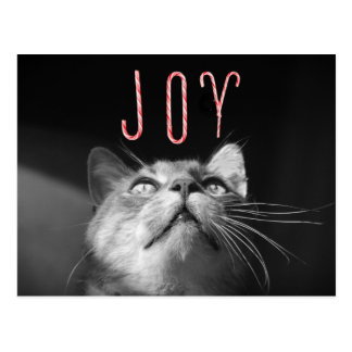 Gato adorable del navidad tarjeta postal