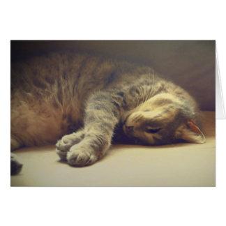 Gato adorable tarjetón