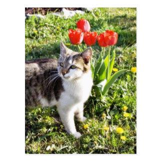 Gato al lado de los tulipanes rojos en el jardín postal