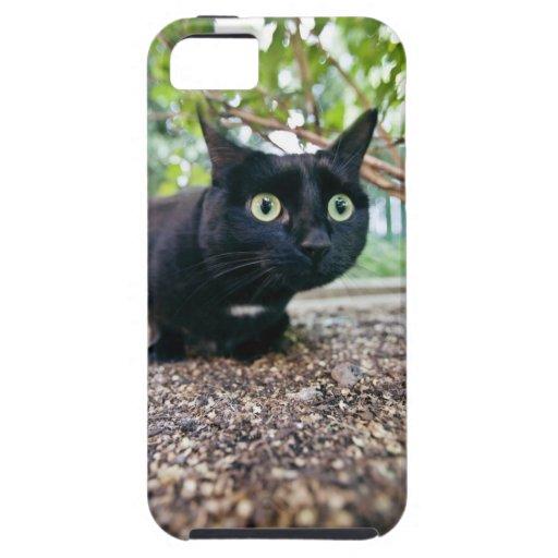gato alertado que oculta debajo de arbusto funda para iPhone SE/5/5s