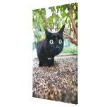 gato alertado que oculta debajo de arbusto impresiones en lona