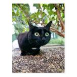 gato alertado que oculta debajo de arbusto postal