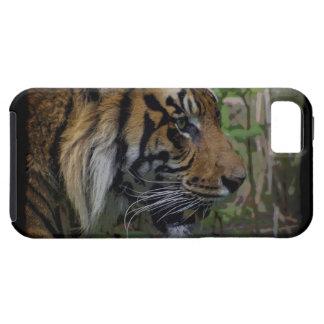 Gato-Amante grande del animal salvaje del tigre de iPhone 5 Carcasa