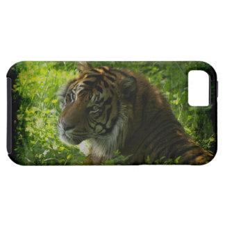 Gato-Amante grande del animal salvaje del tigre de iPhone 5 Fundas