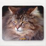 """""""Gato-amante Mousepad del Coon de Maine de la este Alfombrilla De Ratón"""