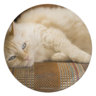 Gato amarillo bonito del tabi que pone en el sofá plato de comida