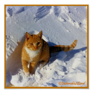 Gato amarillo en el poster de la nieve