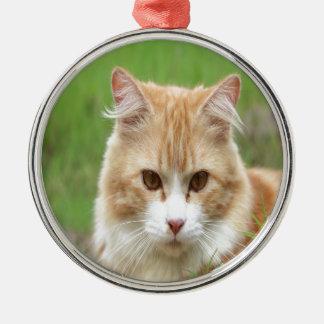 Gato amarillo lindo adorno redondo plateado
