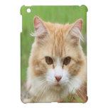 Gato amarillo lindo iPad mini coberturas