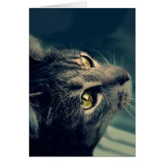 Gato Amarillo-Observado vintage que mira para Tarjeta Pequeña
