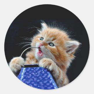 Gato anaranjado azul que juega y que muerde de Cub Pegatina Redonda