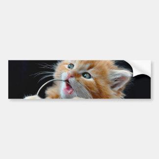 Gato anaranjado azul que juega y que muerde de Cub Pegatina Para Auto