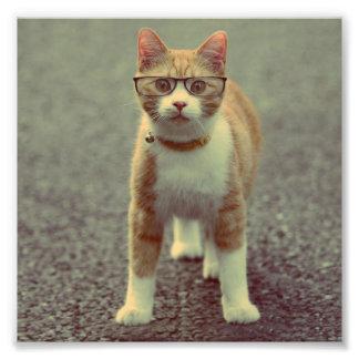 Gato anaranjado con los vidrios cojinete