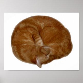 Gato anaranjado el dormir póster