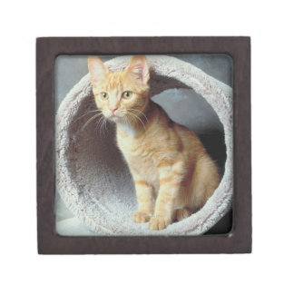 Gato anaranjado en juguete cajas de regalo de calidad