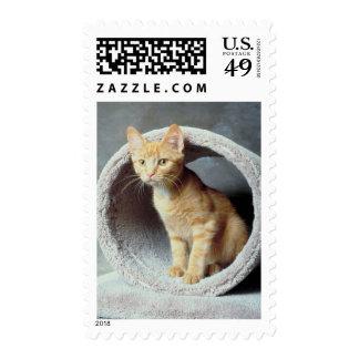 Gato anaranjado en juguete sellos postales