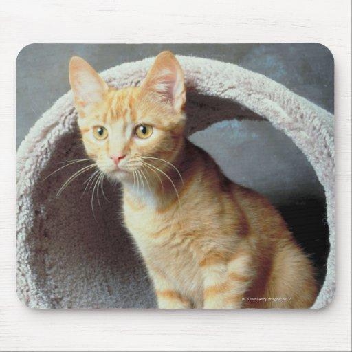 Gato anaranjado en juguete tapetes de ratón