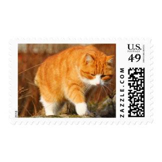 Gato anaranjado grande de Tom en el vagabundeo Estampilla