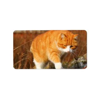 Gato anaranjado grande de Tom en el vagabundeo Etiquetas De Dirección