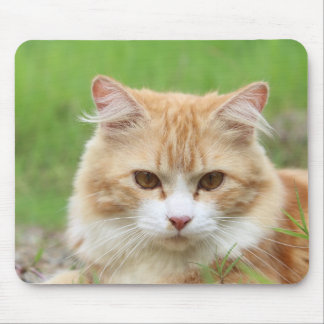 Gato anaranjado lindo tapete de raton