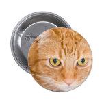Gato anaranjado pin