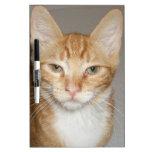 Gato anaranjado pizarra