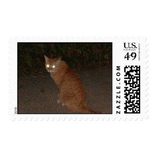gato anaranjado envio