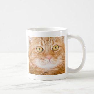 Gato anaranjado taza