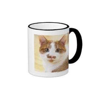 gato anaranjado y blanco que mira la cámara taza de dos colores