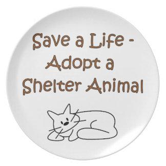 Gato animal del refugio del rescate de la adopción plato