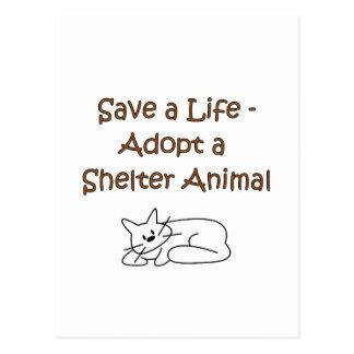 Gato animal del refugio del rescate de la adopción tarjetas postales