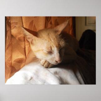 Gato asiático del jengibre el dormir por el poster póster