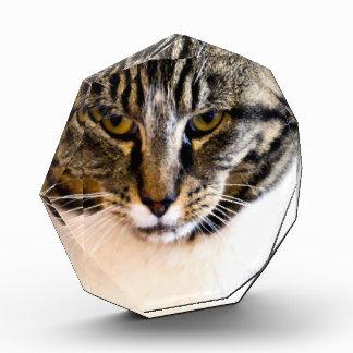 Gato asustadizo