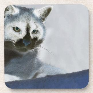 Gato azul del zapato de la nieve en el vagabundeo posavasos