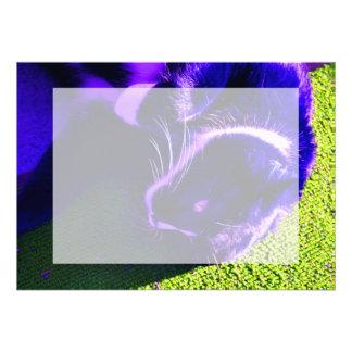 gato azul en imagen animal felina lateral del arte invitaciones personales
