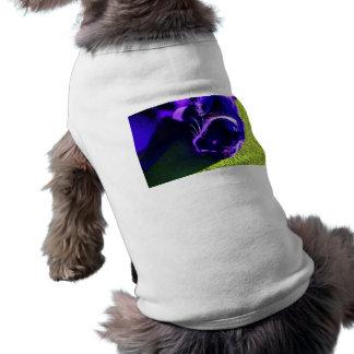 gato azul en imagen animal felina lateral del arte camisa de mascota