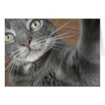 gato azul grande tarjeta de felicitación