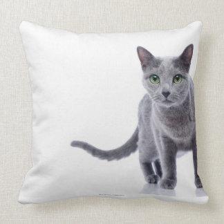 Gato azul ruso cojin