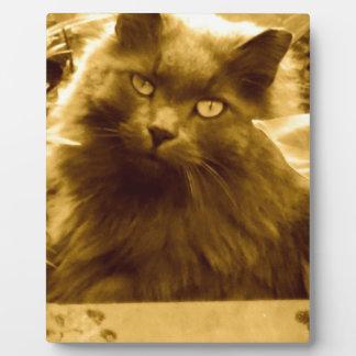 Gato azul ruso de pelo largo del vintage placa para mostrar